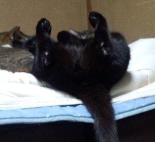 おいらのベッドの上で我が物顔で寝るニャンコ